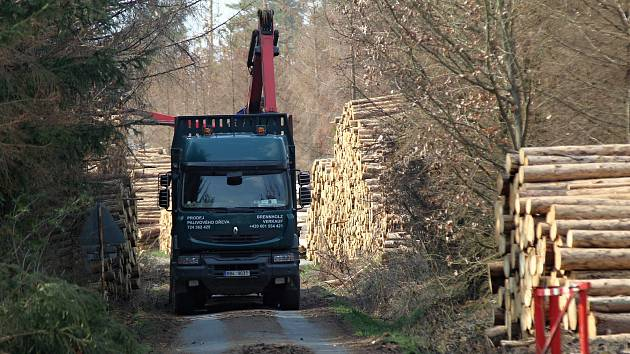 Kůrovci padne za oběť čtvrtina státních lesů na Třebíčsku
