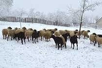 Péče o zvířata bude součástí aktivit na příměstském táboře v Chaloupkách.