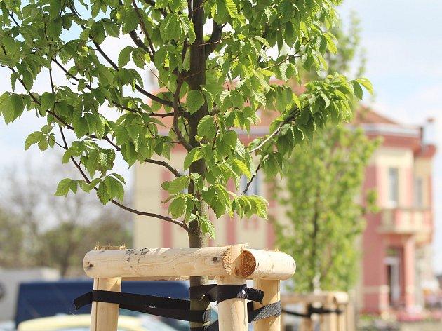 Zahradníci vysadili na různých místech v městysi celkem 117 stromů.