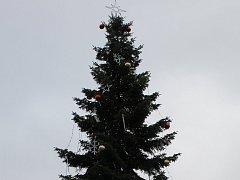 Jedle obrovská, která rostla v třebíčské Nikovémově ulici, zdobí tamní Karlovo náměstí coby vánoční strom.