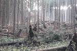 Na snímku z 30. října lesy u obce Radenice v okrese Žďár nad Sázavou.
