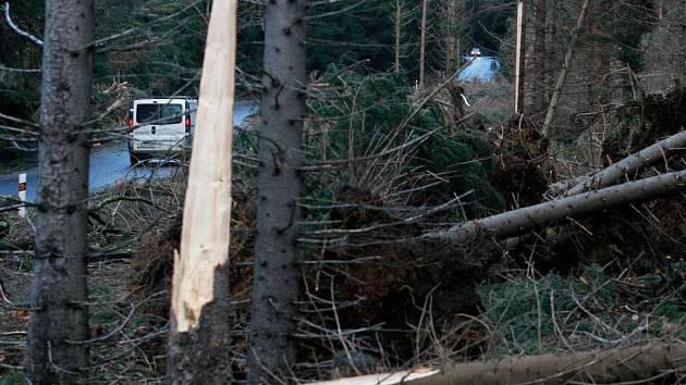 Cestáři na Třebíčsku pokáceli nejvíce stromů.