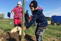 Obyvatelé obec Mastník na Třebíčsku vysadili nové stromořadí podél cesty k rybníkům.