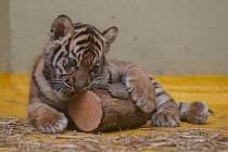 Jihlavská Zoo zůstává s návštěvníky v kontaktu i v době nouzového stavu.Ilustrační snímek.