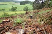 Ze zdravého lesa zbyla holina. Zdravé i poškozené dřevo odvezli těžaři, příští majitel musí pozemek zalesnit.