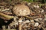 Plné koše hub. Na Třebíčsku rostou hřiby, bedly i muchomůrky.