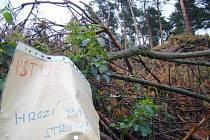 Les u Horních Vilémovic
