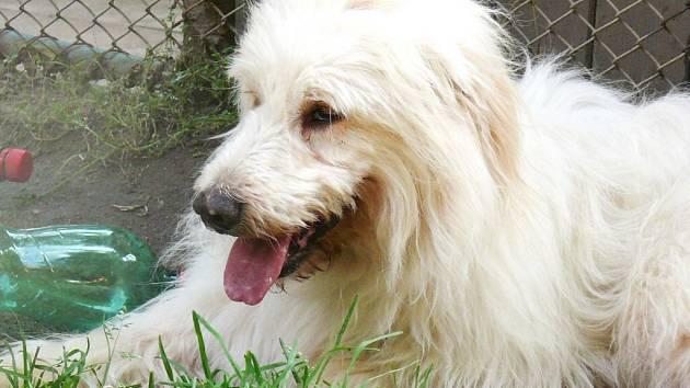 Malé štěně odpočívá za mřížemi kotce v třebíčském útulku. Je jedním z několika desítek čtyřnohých tvorů, který je souzeno takto žít. Psy u útulku často odkládají sami majitelé.