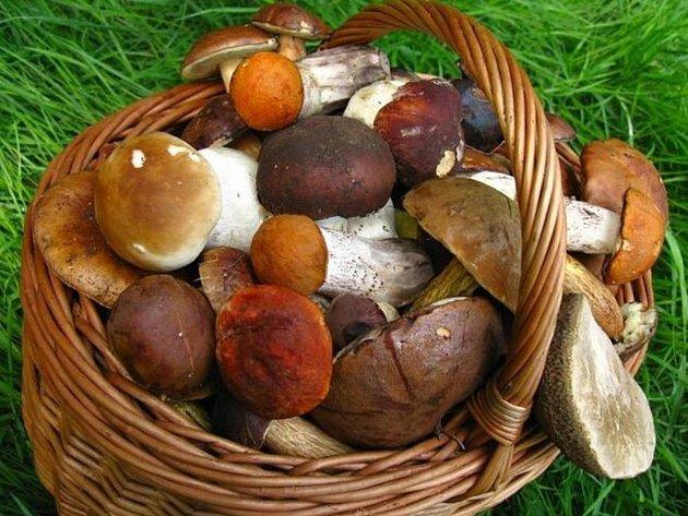 Křižánky zahájí tradiční houbovou výstavu