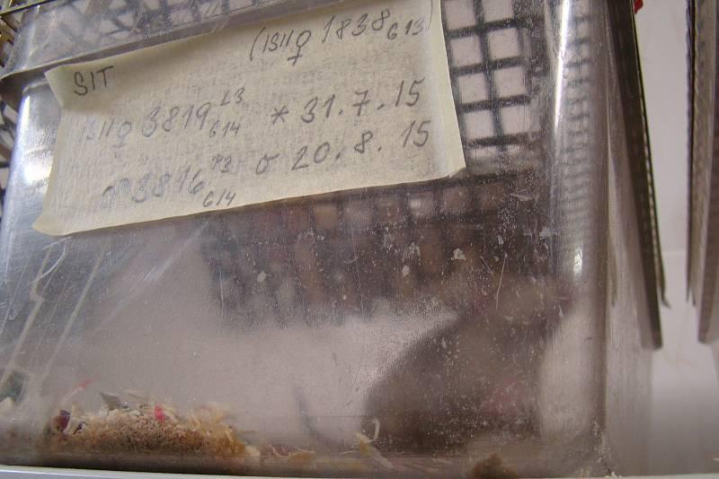Vědci ze Studence ukázali veřejnosti chovy myší, zebřiček i laboratoř pro práci s DNA.