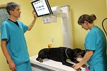 Veterinář Luděk Kučera z Horních Vilémovic přijímá své pacienty i na klinice v Jihlavě. Kromě psů, koček a hospodářských zvířat už ošetřoval chameleony, hroznýše, kajmany nebo třeba pštrosy. Podílel se i na poznávání života divokých vyder.