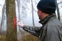 Farníci z Rudíkova prošli dvanáct hektarů lesa, který farnost v rámci církevních restitucí získala. Některé krajové stromy označili sprejem symbolem F.