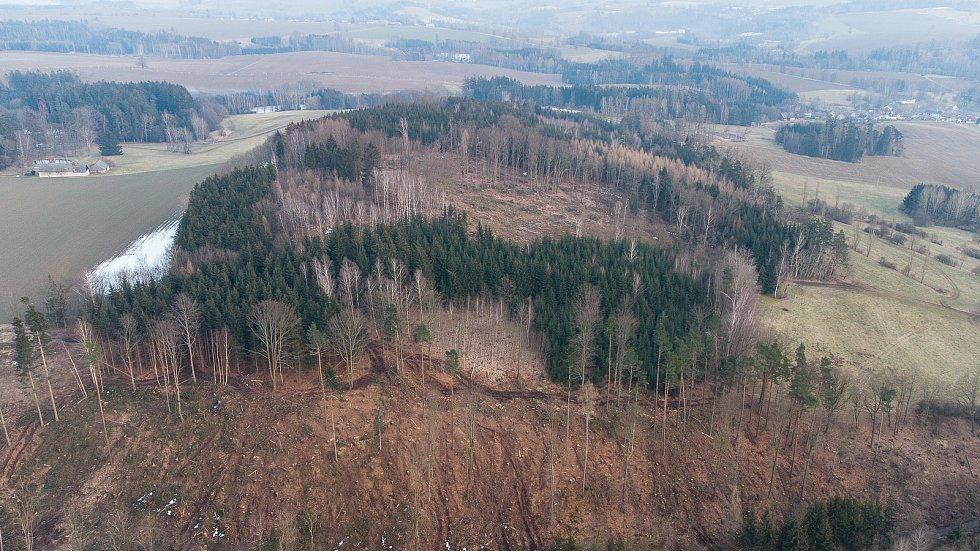 Les napadený kůrovcem na Havlíčkobrodsku.