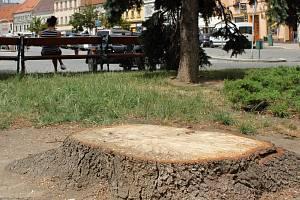 Na třebíčském Karlově náměstí zbývají po uschlých stromech už jen pařezy.
