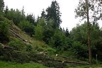 LESOPARK U POUŠOVSKÉHO MOSTKU. Řada vzrostlých stromů tam musela být vykácena kvůli napadení kůrovcem.