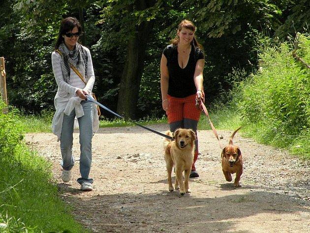 Vyrazit na akci Útulkáčci, pojďte s námi na procházku můžete se svým miláčkem nebo si půjčit psa z útulku.