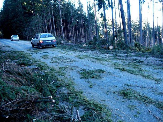 Spadané stromy u Rokytnice.