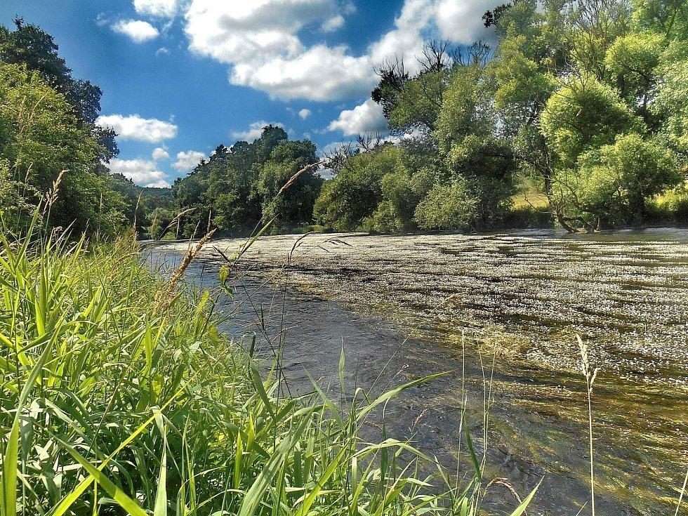 Kvetoucí řeka Jihlava pod Templštýnem