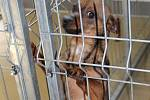 Celkem patnácti psům, které úřady odebraly majitelce v Čechočovicích 21. ledna 2020, se v třebíčském psím útulku daří dobře.