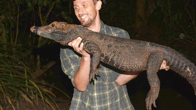 Krokodýl konžský měří zpravidla jen něco málo přes metr. I to by mohl být důvod, že se na tohoto trpaslíka mezi krokodýly v posledních sto letech zapomnělo.