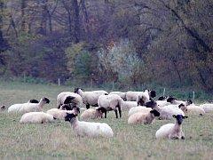 Někteří chovatelé hospodářských zvířat na Třebíčsku mohou mít kvůli suchu potíže s obstaráváním krmiva na zimu.