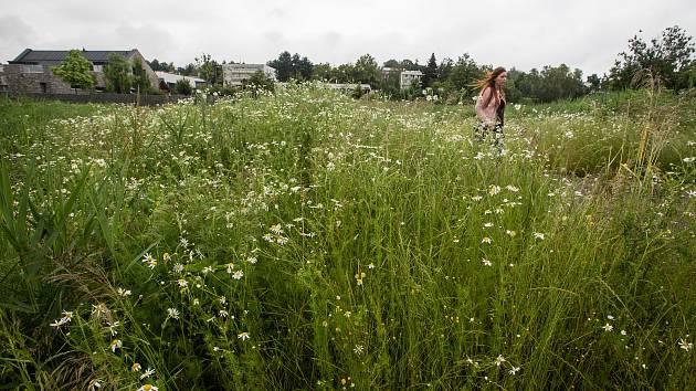 Neposečená tráva. Ilustrační foto