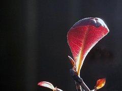 Poslední probarvené listy září v příjemném listopadovém slunci v parcích a zahradách na Třebíčsku.