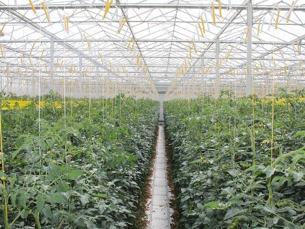 Takto vypadá hotový skleník stejného typu, jaký roste u Kožichovic. Tento se nachází u Velkých Němčic na Břeclavsku.