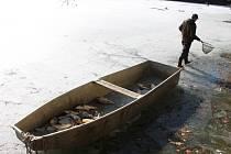 Spoustu uhynulých ryb už rybáři vylovili. Práce budou pokračovat, protože většina ledu ještě neroztála.