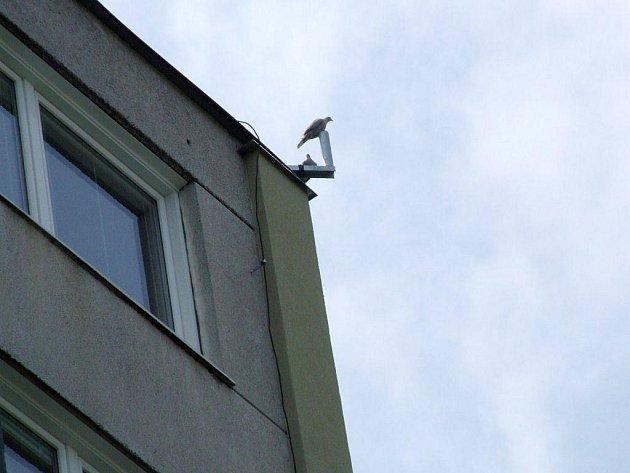 Panelák v Družstevní ulici je momentálně bez mobilní kamery.