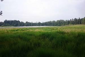 Rašeliniště u rybníka Velký Babín.