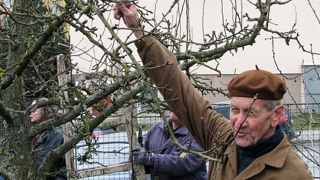 Ukázka řezu ovocných stromů.