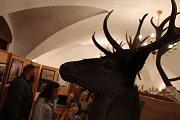 Paroží jelena a daňka je v Náměšti na dosah ruky. Podívejte se