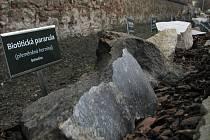 Patnáct druhů hornin a minerálů s odborným textem na dřevěných tabulích nově lemují cestu od vchodu do areálu školy po budovu tělocvičny.