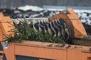 Likvidace vánočních stromků na skládce v Petrůvkách na Třebíčsku.