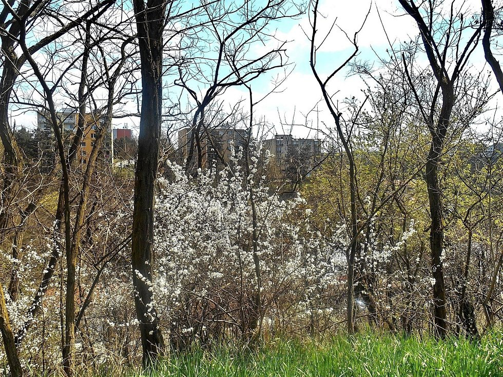 Jaro v Třebíči