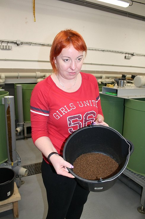 Sumečky africké se jako první na Vysočině rozhodli chovat ve velkém v ZD Hrotovice. Hana Nahodilová ukazuje granulované krmivo.