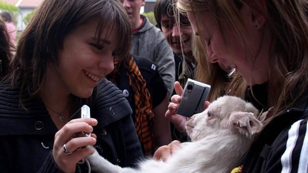 Belgičtí studenti na farmě plné koz