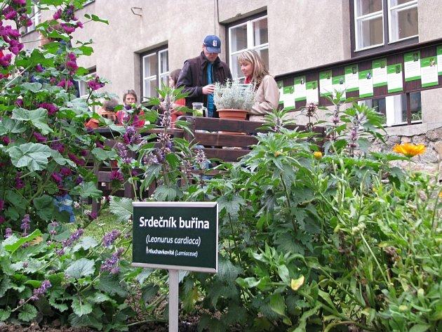 V Katolickém gymnáziu Třebíč mají nově bylinkovou zahrádku s pěti desítkami rostlinek. Její součástí je také naučná stezka s informacemi o bylinkách i příjemné posezení pro studenty a veřejnost.