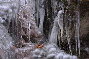 Zimní scenérie na potůčku Cihelna.