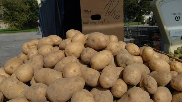 Letošní suché počasí bramborovým porostům zatím neškodí.