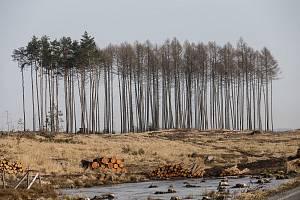 Les napadený kůrovcem na Třebíčsku.