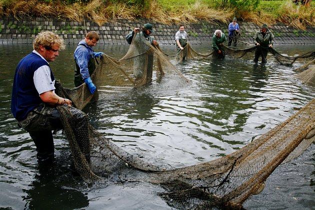 RYBY TRPÍ. Rybníky vysychají a ryby jsou v ohrožení.