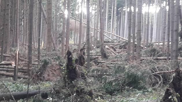Na Žďársku je kalamita, nedoporučuje se vstup do lesů