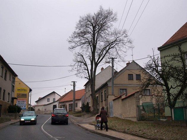 Lípa byla zasazena spolu s jinými listnáči na několika místech čtvrti Týn při příležitosti 10. výročí vzniku Republiky v roce 1928.
