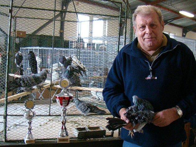 V okresní výstavě holubů, kterou ve svém areálu pořádali budišovští chovatelé, zvítězila pětičlenná kolekce kudrnáčů. Poháry převzal jejich hrdý a dlouholetý chovatel Miroslav Novotný ze Smrku (na snímku).