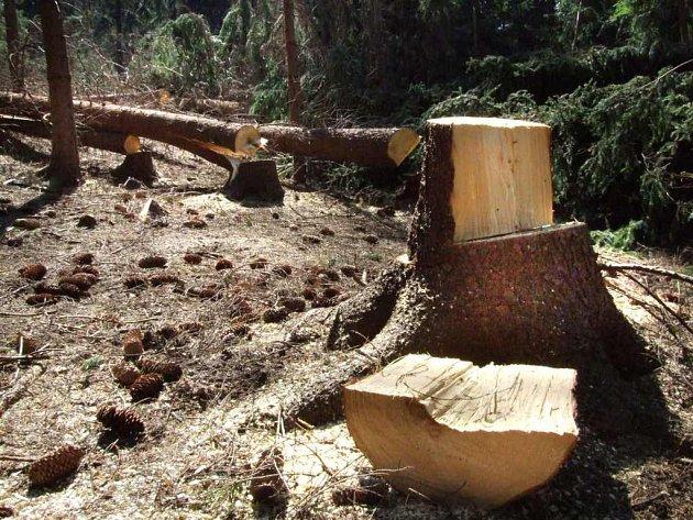 Spoušť. Les u Čechtína zůstal po nájezdu dřevorubců zničený. Stromy, které nešly k zemi, jsou poškozené.
