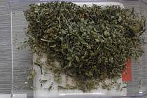 Marihuana, kterou policisté našli při domovní prohlídce.