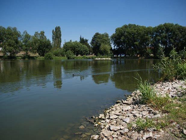 V třebíčském rybníce Kuchyňka uhynuly stovky ryb.