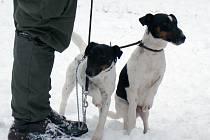 Lovečtí psi na zkouškách v honitbě Kosová
